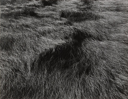 Harry Callahan, Horseneck Beach, Massachusetts, c. 1965. Collection of the Museum of Modern Art, New York.