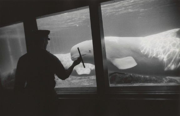 Garry Winogrand, New York Aquarium, Coney Island, 1967.