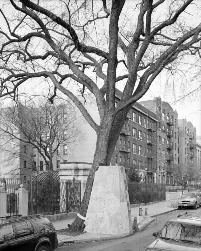 Mitch Epstein, American Elm, Eastern Parkway, Brooklyn, 2012, 2012.