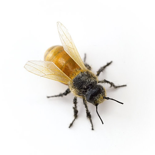 Tom Friedman, Untitled (Bee), 2007.