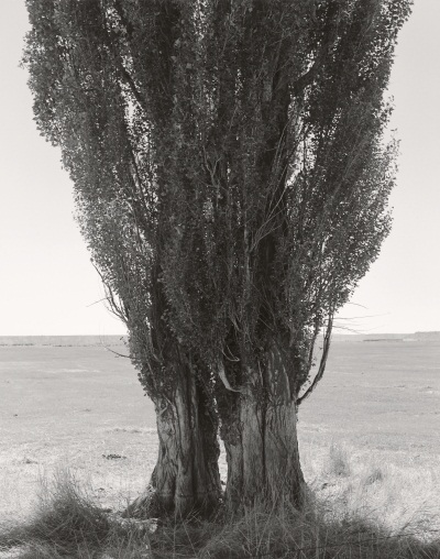 "Robert Adams, Harney County, Oregon, from ""Poplars,"" 1999."