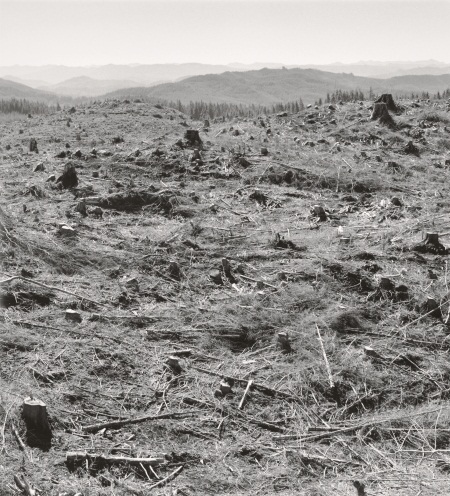 "Robert Adams, Clatsop County, Oregon, from the series ""Turning Back,"" 1999-2003."