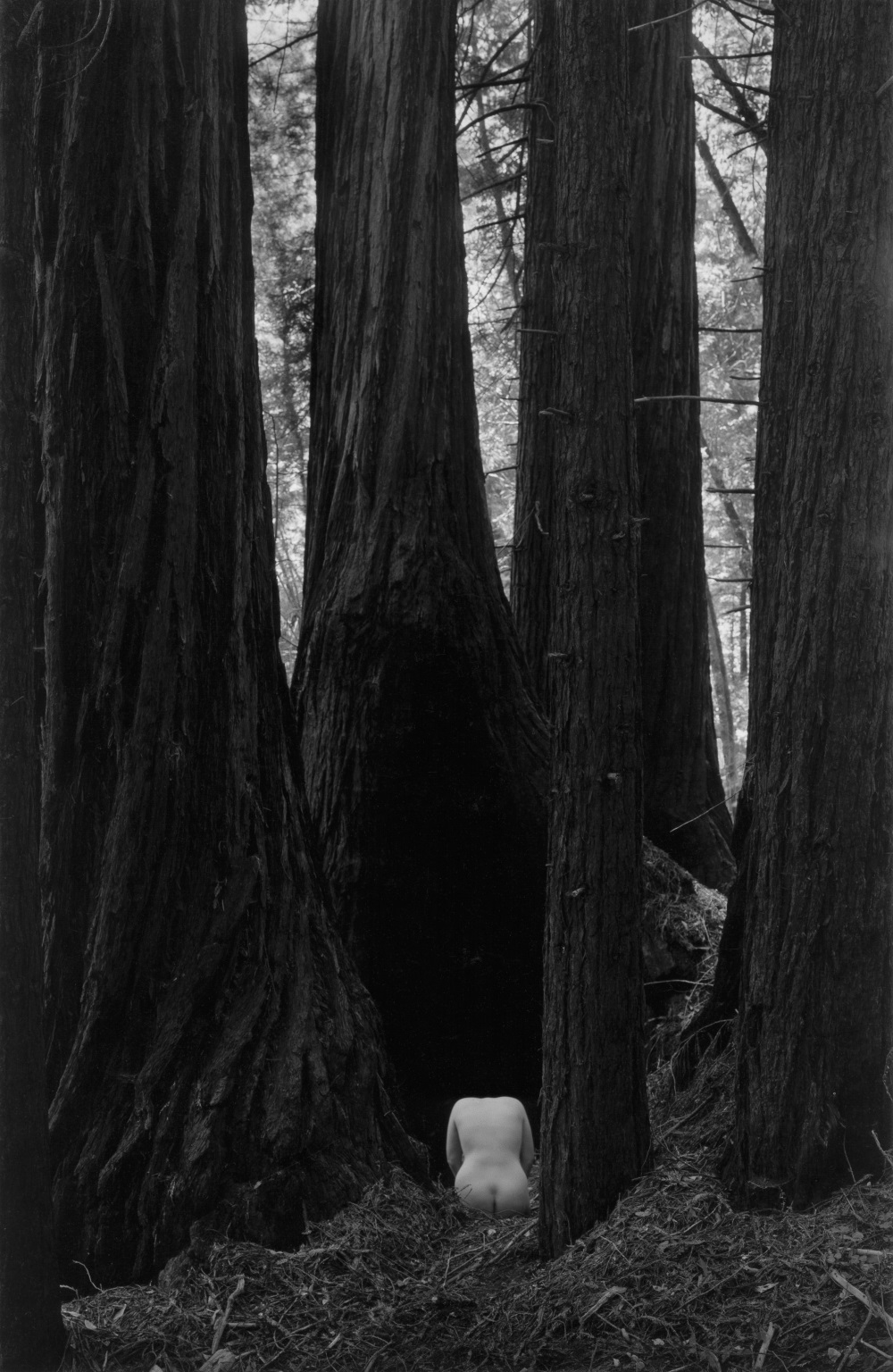 Wynn Bullock, Nude Torso in the Forest, 1958.