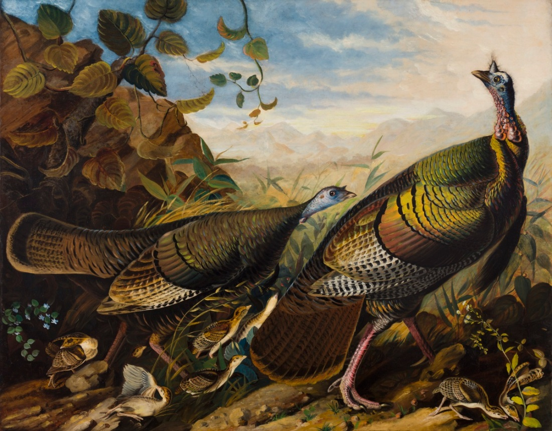 John James Audubon, Wild Turkey Cock, Hen and Young, 1826. Collection of the Crystal Bridges Museum of American Art, Bentonville, Ark.