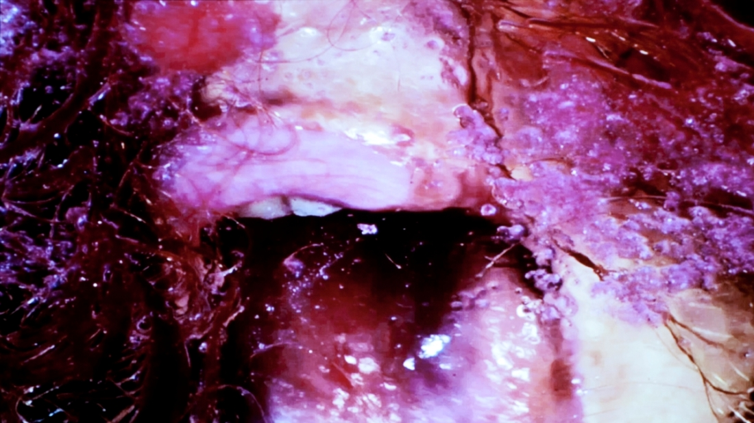 "Marilyn Minter, Still from ""Green, Pink, Caviar,"" 2009."