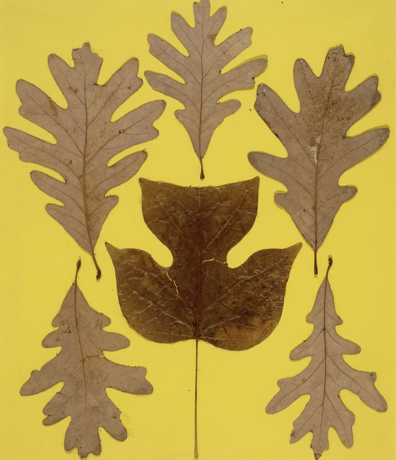 Josef Albers, Leaf Study IX, ca. 1940.
