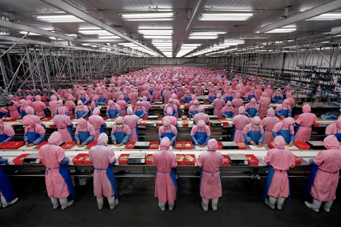 Edward Burtynsky, Deda Chicken Processing Plant, Dehui City, Jilin Province, China, 2005.