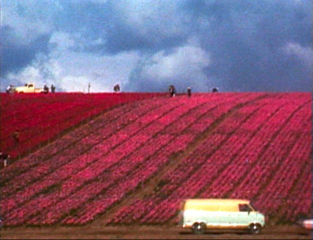 Still from Martha Rosler, Flower Fields, 1974.